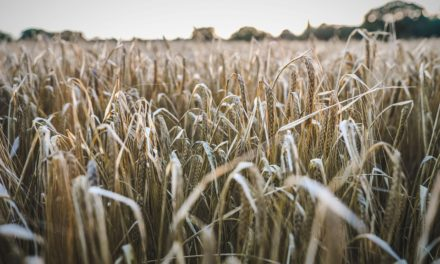 Farmland values in England and Wales set to stabilise in 2018, latest analysis suggests