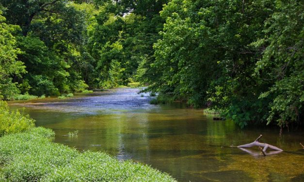 Re-wilding Streams: Letting Nature Control Flooding