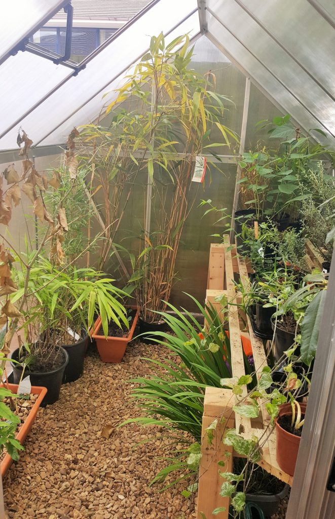 National trade body's live demo for invasive weeds