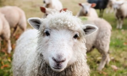 Sheep dip – has the wool been pulled over our eyes?