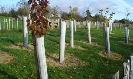 Climate Change:  More Trees Needed More Quickly!