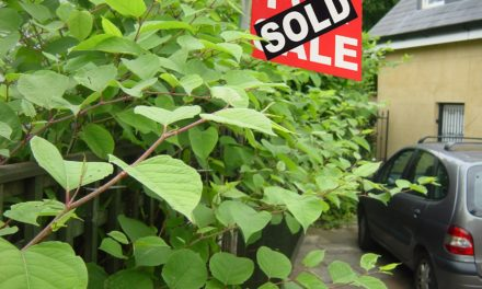 Buyers shoulder Japanese knotweed risk following changes to TA6