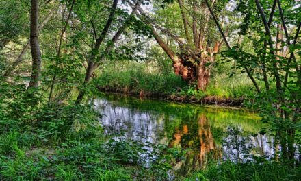 A river runs through it – riparian rights and responsibilities