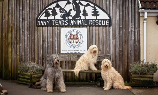 Convey Law donates funds to Many Tears Animal Rescue and MS Society